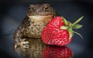 Funny Animals Eating 13 Cool Wallpaper