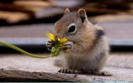 Funny Animals Eating 14 Background Wallpaper