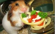 Funny Animals Eating 21 Background
