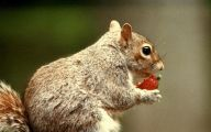 Funny Animals Eating 28 Widescreen Wallpaper