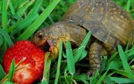 Funny Animals Eating 30 Cool Wallpaper