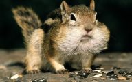 Funny Animals Eating 32 High Resolution Wallpaper