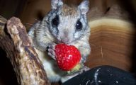 Funny Animals Eating 34 Background Wallpaper