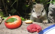Funny Animals Eating 4 Cool Hd Wallpaper