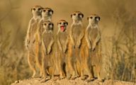 Funny Animals In Africa 1 Free Wallpaper