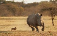 Funny Animals In Africa 10 Cool Wallpaper