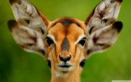 Funny Animals In Africa 17 Free Hd Wallpaper