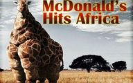 Funny Animals In Africa 2 Free Wallpaper