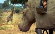 Funny Animals In Africa 21 Widescreen Wallpaper