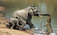 Funny Animals In Africa 23 Desktop Wallpaper