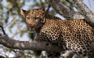Funny Animals In Africa 24 Desktop Background