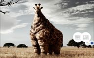 Funny Animals In Africa 27 Widescreen Wallpaper
