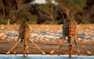 Funny Animals In Africa 28 Cool Wallpaper
