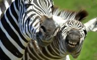 Funny Animals In Africa 31 Free Wallpaper