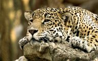 Funny Animals In Africa 6 High Resolution Wallpaper