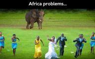 Funny Animals In Africa 7 Free Wallpaper
