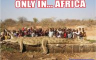 Funny Animals In Africa 8 High Resolution Wallpaper