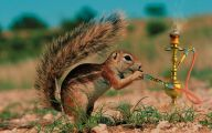 Funny Animals Pics 11 Desktop Background