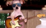 Funny Animals Wallpapers 24 Cool Hd Wallpaper