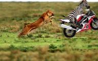 Funny Animals Wallpapers 33 Free Wallpaper
