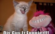 Funny Animals With Captions 12 Cool Wallpaper