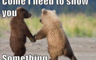 Funny Animals With Captions 27 Hd Wallpaper