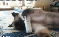 Funny Animals With Captions 32 Desktop Wallpaper