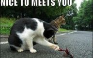 Funny Animals With Captions 34 Widescreen Wallpaper