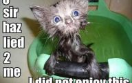 Funny Animals With Captions 38 Hd Wallpaper