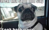 Funny Animals With Captions 43 Background