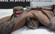 Funny Animals With Captions 6 Desktop Wallpaper