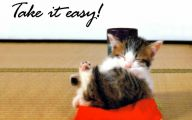 Funny Animals With Quotes 14 High Resolution Wallpaper
