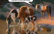 Funny Animals With Quotes 15 Background