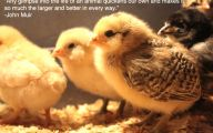 Funny Animals With Quotes 2 Wide Wallpaper