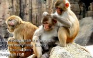 Funny Animals With Quotes 30 Widescreen Wallpaper