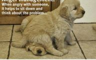 Funny Animals With Quotes 5 Widescreen Wallpaper
