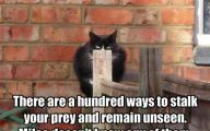 Funny Animals With Quotes 6 Background Wallpaper