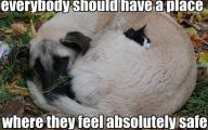 Funny Animals With Quotes 7 Widescreen Wallpaper