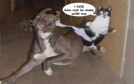 Funny Animals With Sayings 10 Free Hd Wallpaper
