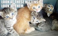 Funny Animals With Words 14 Cool Hd Wallpaper