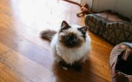 Funny Animated Cats 11 Wide Wallpaper