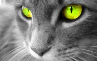 Funny Animated Cats 13 Background Wallpaper