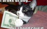 Funny Animated Cats 3 Free Hd Wallpaper