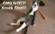 Funny Animated Cats 6 Free Wallpaper