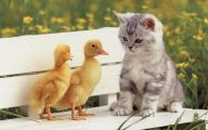 Funny Baby Cats 1 Wide Wallpaper