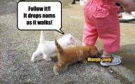 Funny Baby Cats 21 Cool Hd Wallpaper