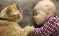 Funny Baby Cats 27 Free Hd Wallpaper