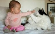 Funny Baby Cats 30 Free Wallpaper