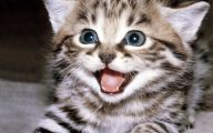 Funny Baby Cats 32 Free Wallpaper