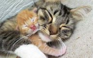 Funny Baby Cats 5 Wide Wallpaper